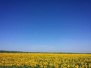 A növényi olajok előnyei