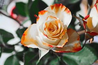 Miért a virág az egyik legnépszerűbb ajándék?